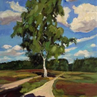 Een boom in Veluwe